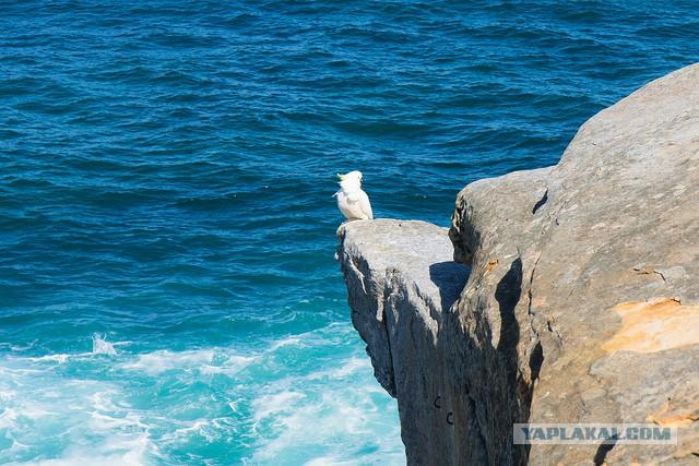 Австралия: Сидней и его окрестности