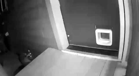 Охранная система
