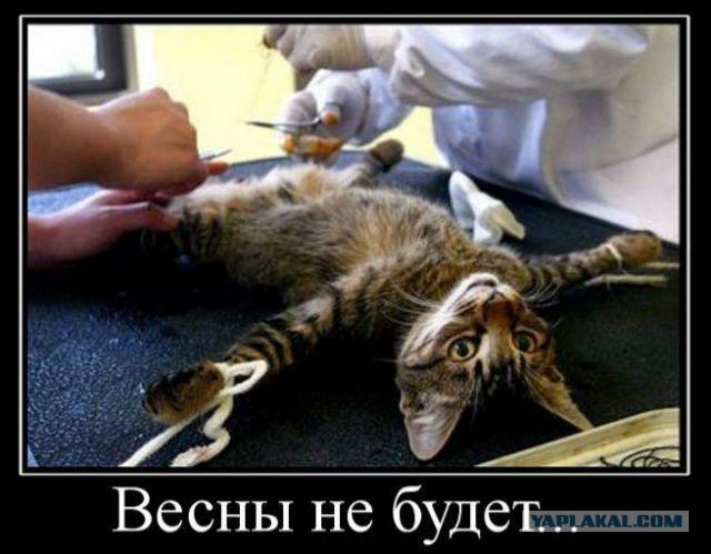 http://s00.yaplakal.com/pics/pics_original/9/6/3/1761369.jpg