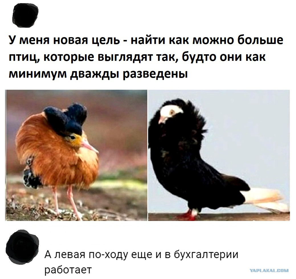 http://s00.yaplakal.com/pics/pics_original/9/6/5/13106569.jpg