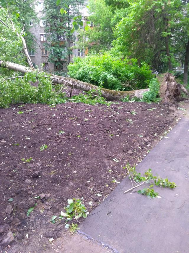 В Нижнем Новгороде ураган вырывает деревья с корнем и переворачивает машины