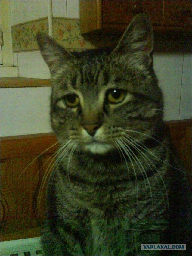 Думающий кот фото