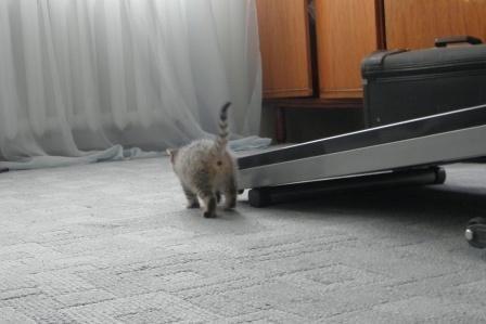 Найдем дом для котэ?=)