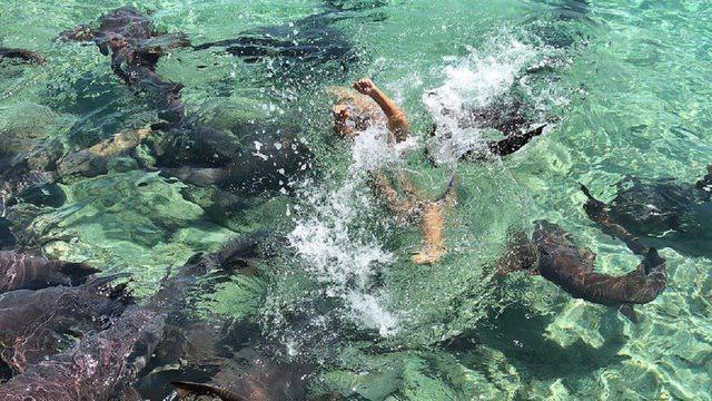 Хотела красивых фоточек с акулами. А они не хотели...