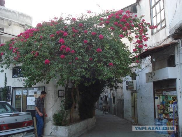 Путешествие по Ближнему Востоку (Сирия – Иордания – Ливан). Часть 1.