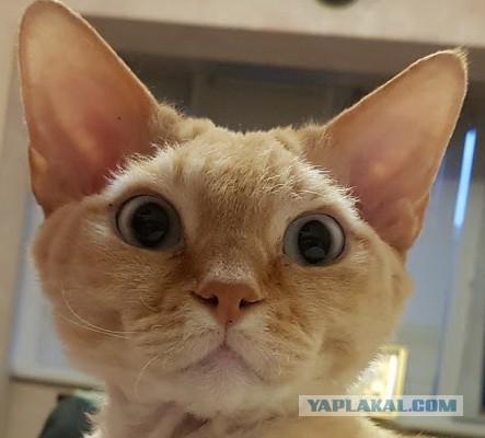 Поставил IP камеру, чтоб посмотреть, что делает мой кот, когда меня нет дома