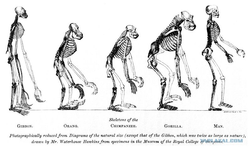 a comparison of charles darwin and herbert spencers theory of where species came from