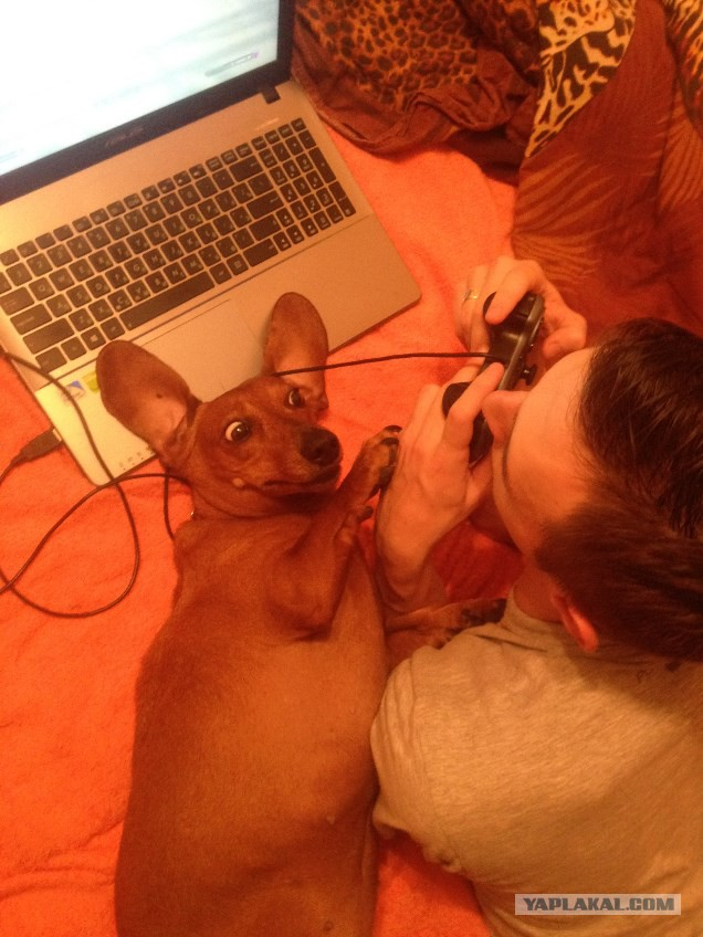 Фото конкурс я и моя собака