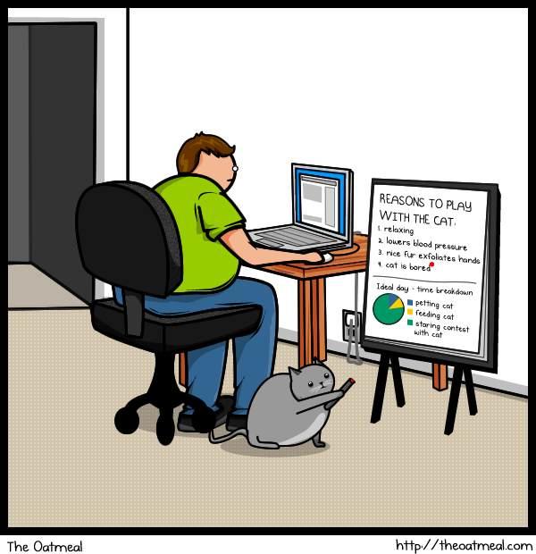 Кот против Интернета