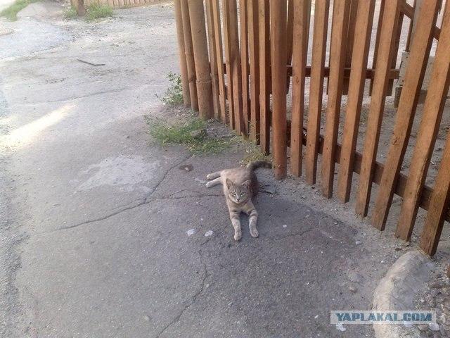 Кот - трансформер.  Задние лапы отдыхают отдельно от передних.