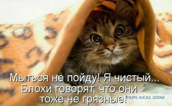 http://s00.yaplakal.com/pics/pics_original/9/9/4/4386499.jpg