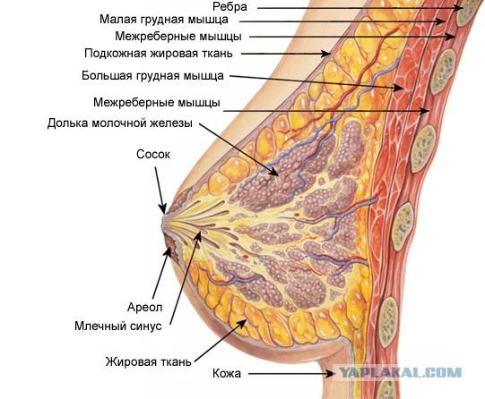 Увеличение груди капсулы китай