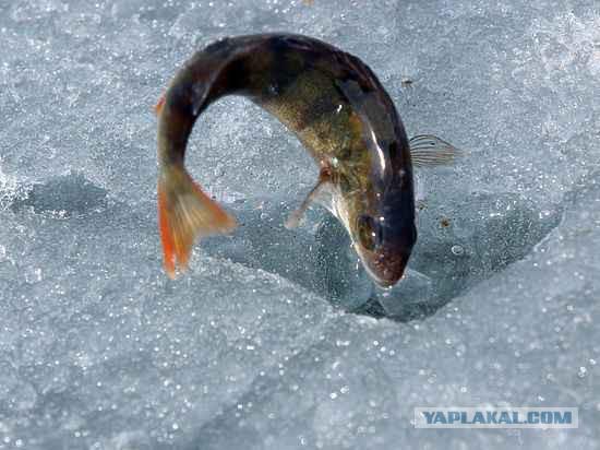 В Совфеде предложили сделать платной всю рыбалку в России