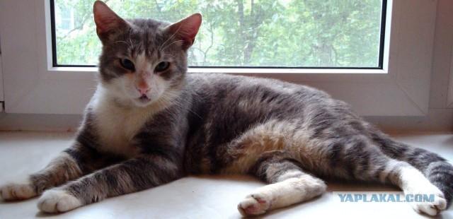 Кот ищет дом, любовь и ласку.
