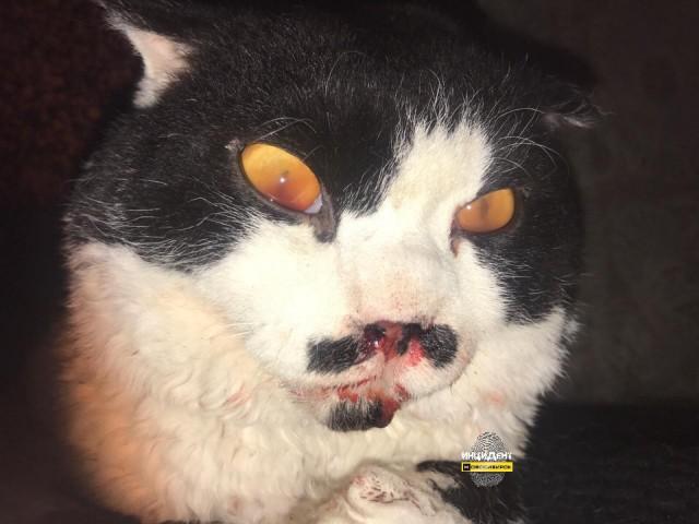 Живодер из Новосибирска избил кота до полусмерти (18+)