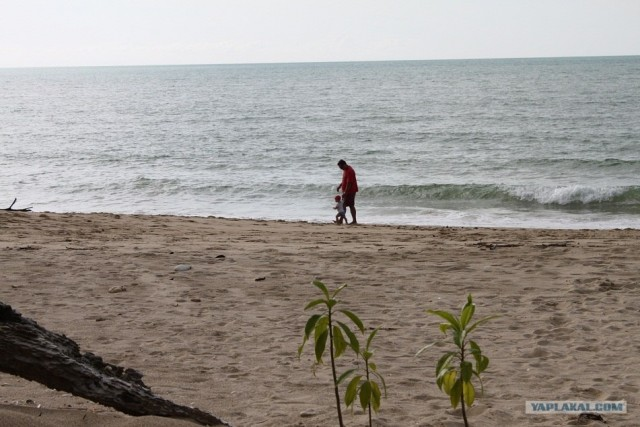В отпуск с детёнышем