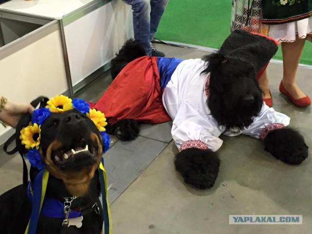 В Киеве собак нарядили в национальные костюмы