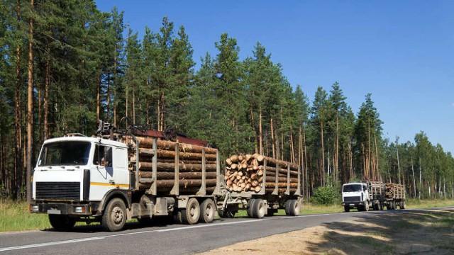 Матвиенко предложила приостановить вывоз леса за границу
