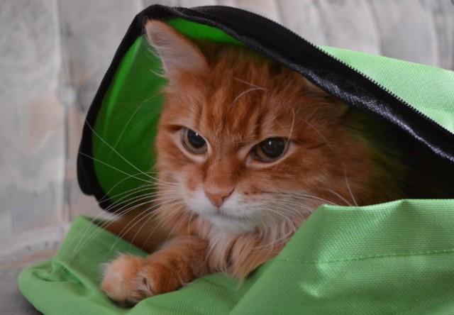 В Новом Уренгое кот в рюкзаке «столкнул» семилетку с 9-го этажа