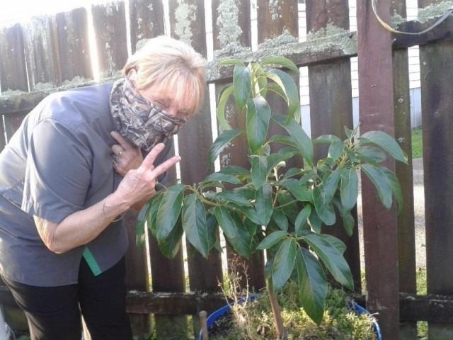 Против системы: жительница Новой Зеландии посадила авокадо без разрешения властей