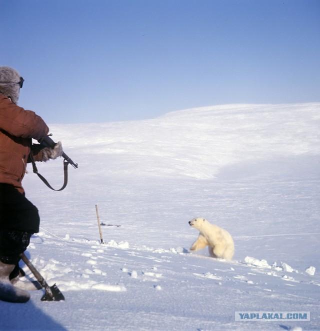 Депутат предложить усилить охрану редких животных путем охоты на них