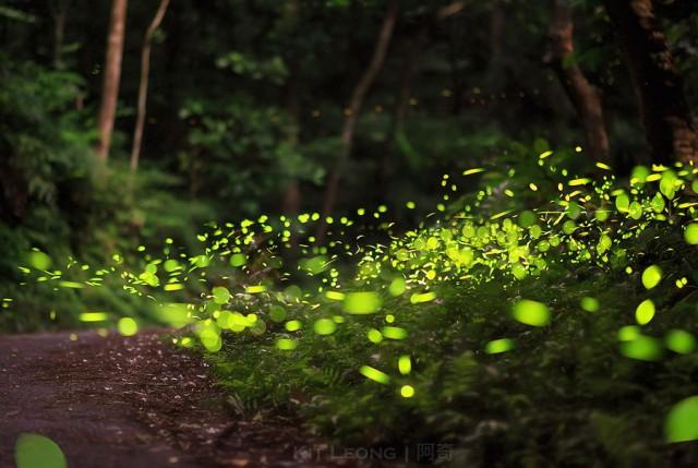 Фотографии светлячков на длинной выдержке
