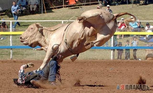 показать как рогатый скот быки трахают женщин и как