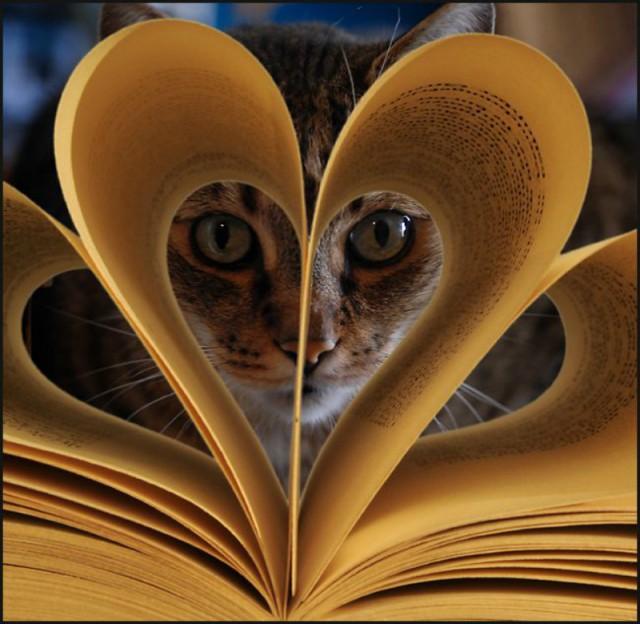 Бесполезные и  даже может недостоверные сведения о животном мире в словах и картинках