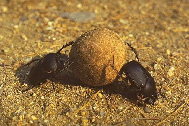 все насекомые египта фото