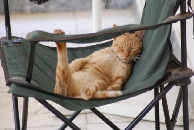 Как сделать чтобы кот не метил территорию
