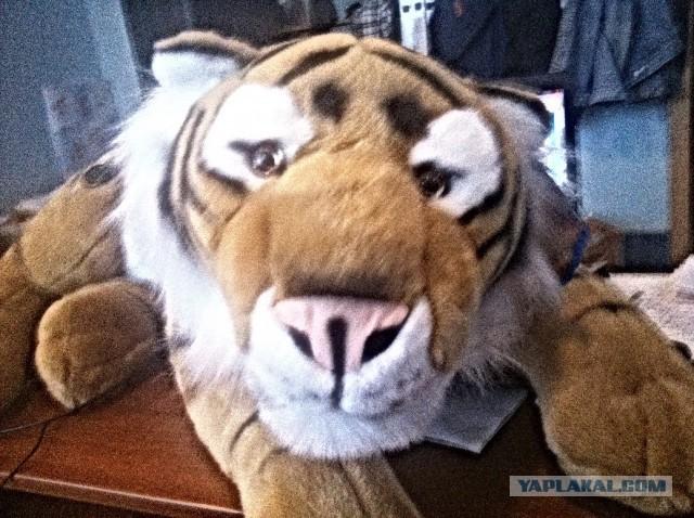 Тигр ждет своего хозяина