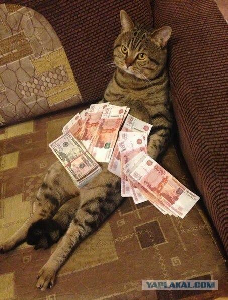 ДОКОЛЕ? Или как заставить кота приносить доход в семью