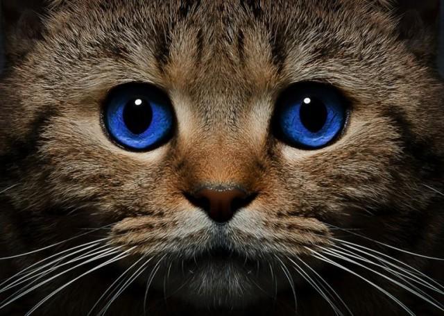картинки на рабочий стол коты № 520234  скачать