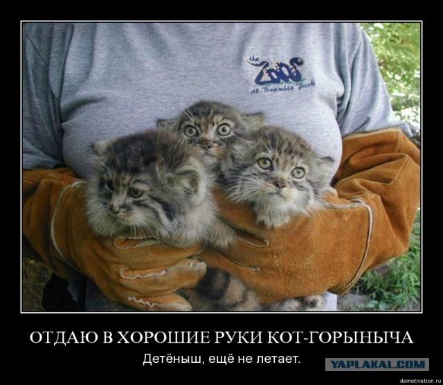 http://s00.yaplakal.com/pics/pics_preview/0/5/5/4174550.jpg