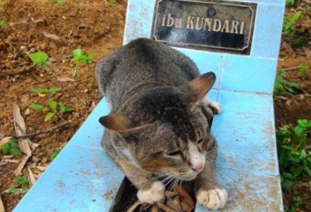 почему кот отказывается есть