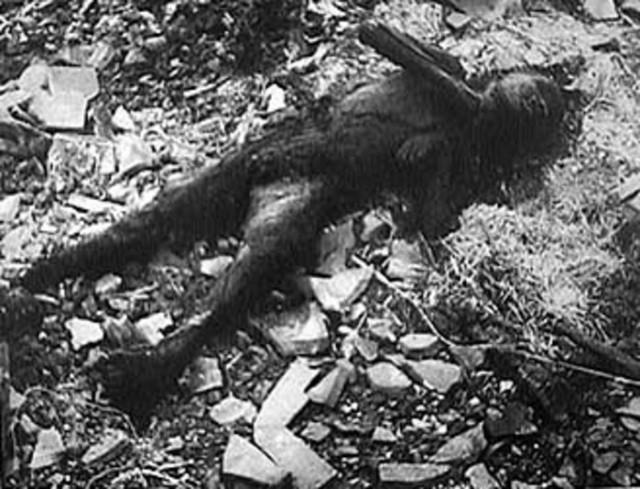 Этот мальчик, который был сожжен до смерти его руками, помещенными в его гр