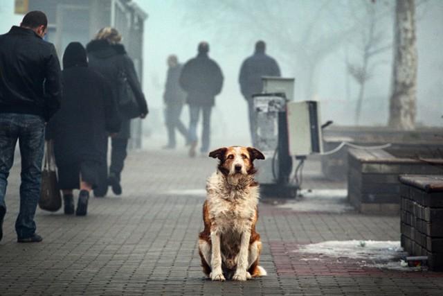 На Урале хозяева бросили собаку в аэропорту, потому что ее не пустили на борт