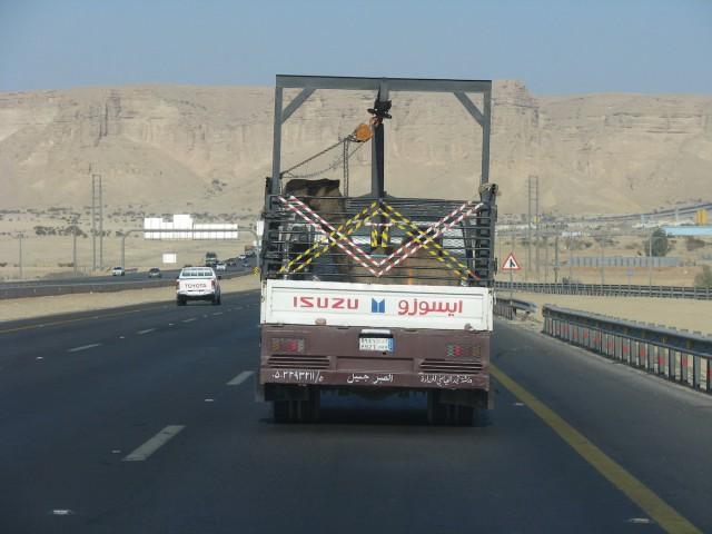 Несколько фотографий из Саудовской Аравии