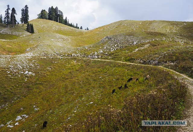 Абхазия Небольшое фотопутешествие