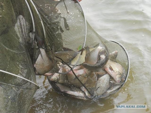 Рыбалка. Болхуны.