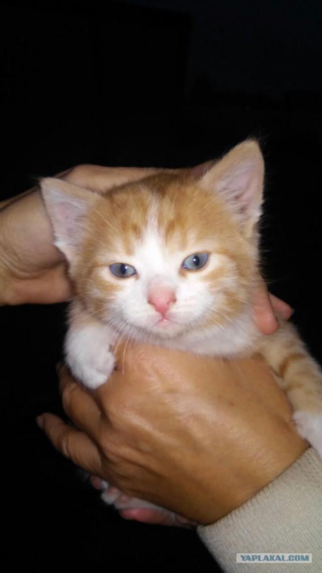 Друзья нашли котят