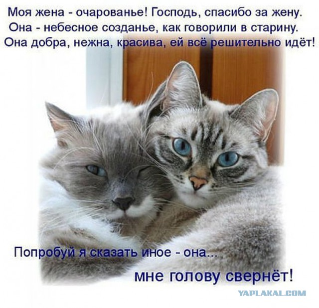 АНАТОМИЯ СРАВНИТЕЛЬНАЯ Энциклопедия Кругосвет
