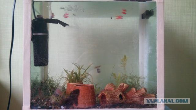 Материалы для аквариума своими руками 74