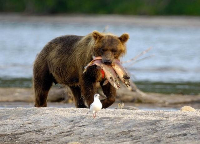способы ловли и медведь