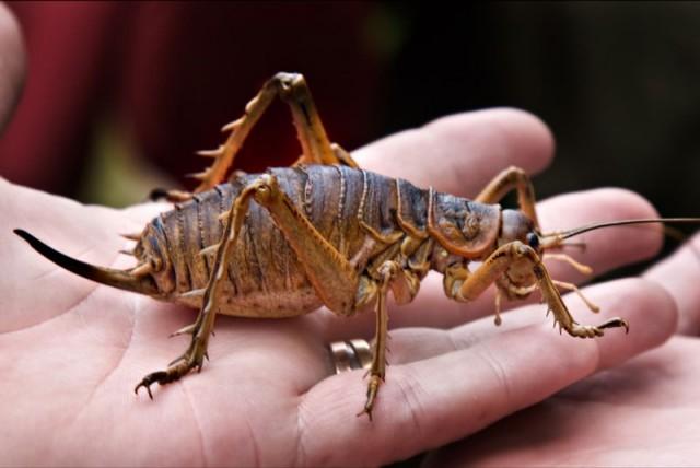 7 самых живучих существ на планете
