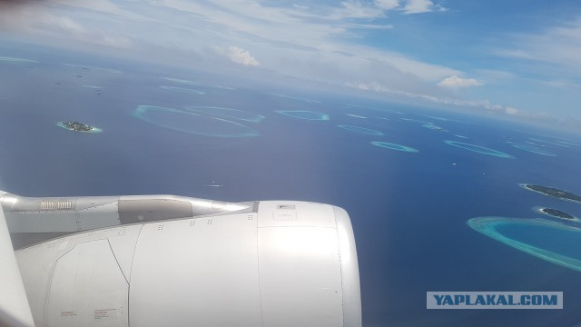 Бюджетный дайвинг на Мальдивах, остров Маафуши