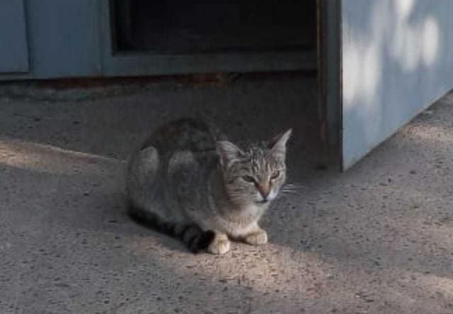 Котя ищет дом.