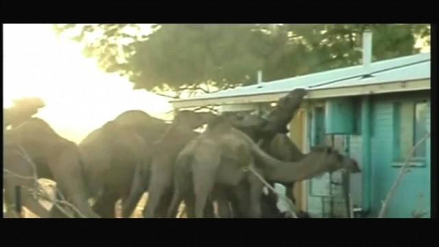 Самые страшные нападения животных на людей