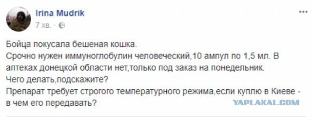 Бешеная кошка покусала украинского солдата в зоне АТО