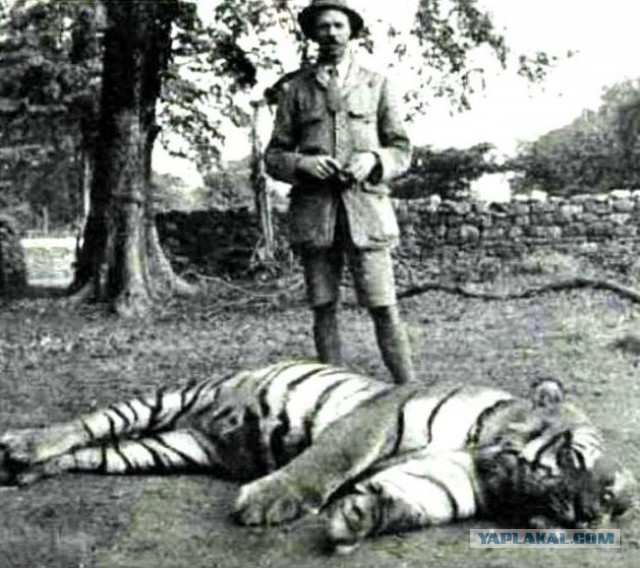 статус тигрица